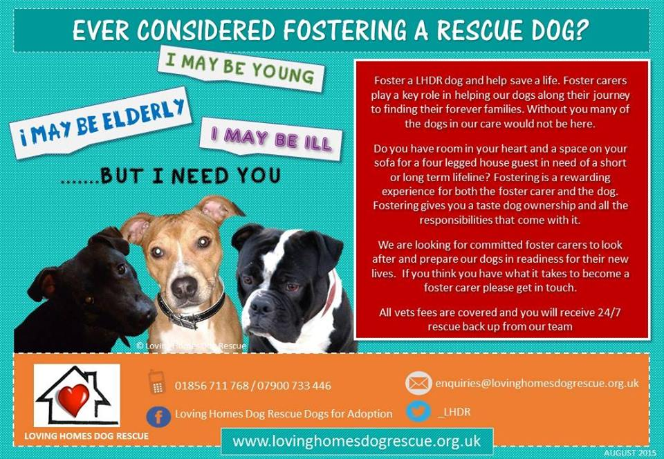 Foster Homes For Dogs Uk